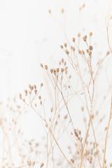 Panel Szklany Podświetlane Minimalistyczny Delicate Dry Grass Branch on White Background
