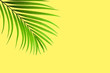 Leinwanddruck Bild - Natural palm leaf on pastel yellow background