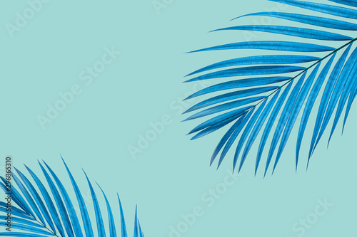 Natural palm leaf on pastel blue background, nature background