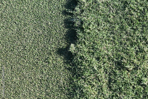 Close up shot of half a golf course green and half a golf course ruff.