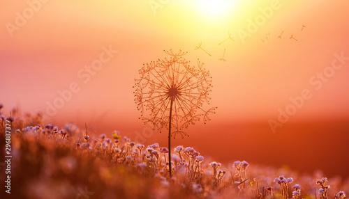 Foto op Plexiglas Macrofotografie dandelion in the setting sun photo background