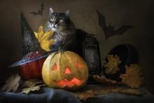 Halloween With Cat
