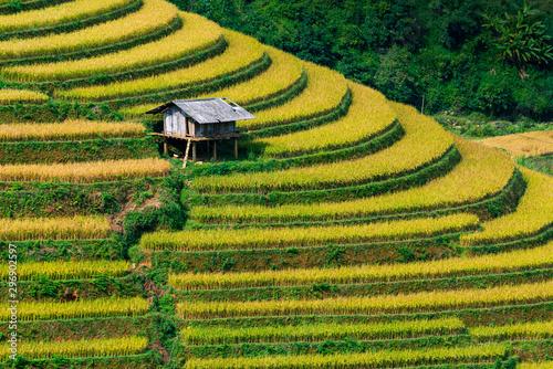 Fotobehang Rijstvelden Close up of a small hut in terraced rice field in Mu Cang Chai, Vietnam.