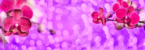 Fotobehang Orchidee blooming purple orchids on a lilac background with bokeh