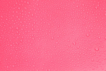Close Up Water Drops On Pink B...