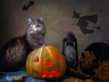 Halloween With Pumpkin And Old Tabby Cat