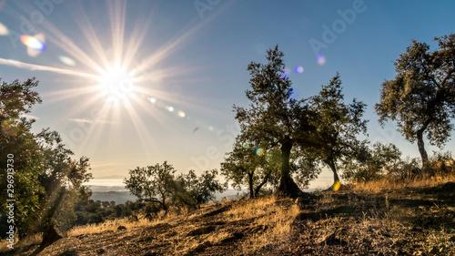 Photo Amanecer en la Sierra de Adamúz, Andalucia