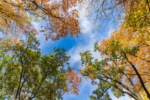 Jesienny krajobraz widok drzew od dołu
