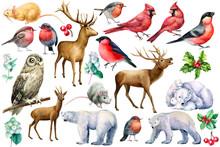 Set Of Watercolor Birds And Animals On A White Background, Bullfinches, Bird Robins, Polar Bear, Deer, Owl, Rat