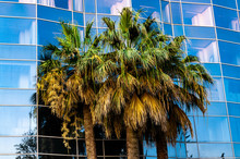 Palm Trees Against The Blue Wi...