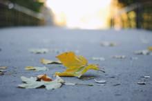 Yellow Maple Leaf Lying On A B...