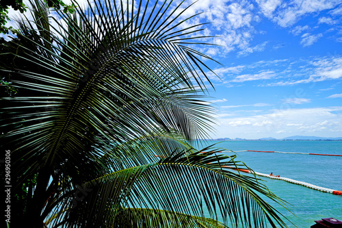 Tropical Background. Palm Leaves and Blue Skyline. Amazing Sea View.