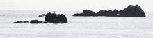 Cormoran En Mer