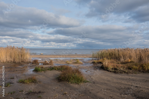 Fototapeta Scenery. View of the lake against the blue sky. White clouds. Reed grows on the sandy shore. Autumn, day. obraz na płótnie