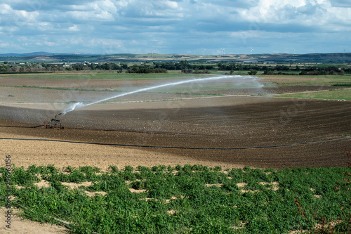Autocollant pour porte Kiev Watering green plants and plowed soil. Newly planted agriculture land.