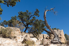 Trees And Rocks Seen Against A Blue Sky