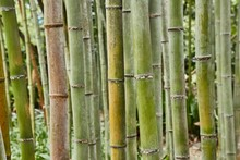 Bamboo Plant Details Backgroun...