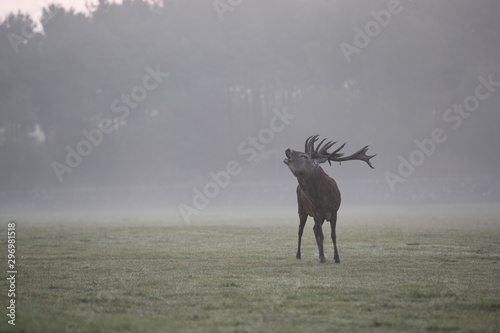 In de dag Antilope Red Deer Stag wildlife