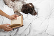 Leinwandbild Motiv Adorable Russian Spaniel with owner in bed, closeup view. Space for text