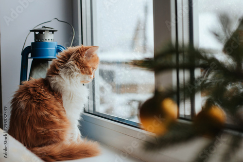 Papiers peints Noir A fluffy red kitten sits on a windowsill and looks out the window. A kitten watches the falling snow.