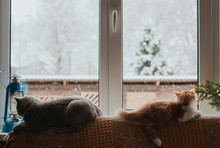 Two Cats Lie On The Back Of The Sofa And Look Out The Window. Cats Are Watching The Falling Snow. Winter Landscape Outside The Window.