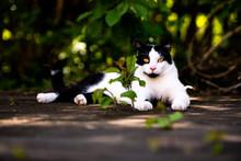 Eine Meister Katze Welche Sich...