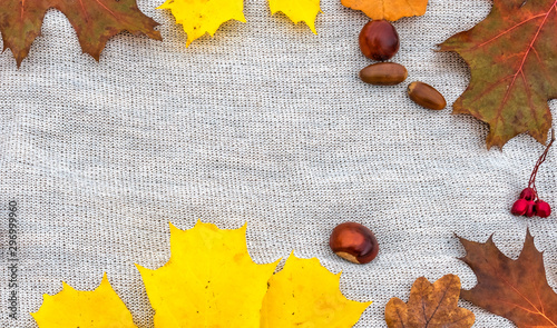 Photo Colorful maple and oak leaves and chestnut and acorns on gray napkin background
