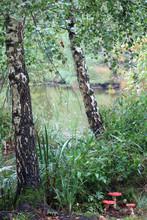 Herbstlicher Zauberwald - Magic Autumn Scenery