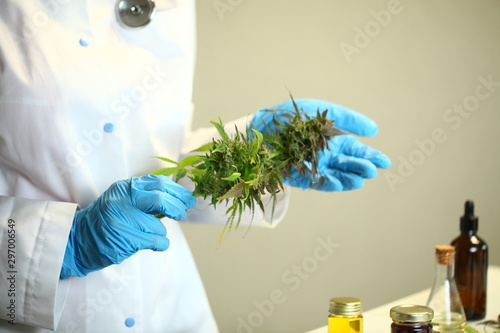 Medical marijuana cannabis cbd oil in doctor scienist hand Wallpaper Mural