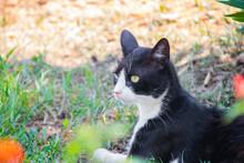 Black And White Cat Sitting And Watching Around.