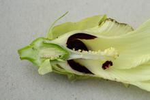 Cross Section Of Okra Flowers