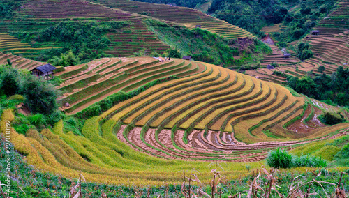 Autocollant pour porte Les champs de riz Terraced rice field in harvest season in Mu Cang Chai, Vietnam.