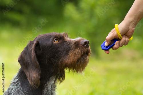 Pinturas sobre lienzo  training a hunting dog with a clicker