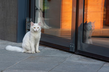 White Street Cat Sitting At Th...