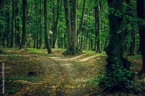 Foto auf Gartenposter Schwarz September season forest scenery landscape outdoor natural environment with lonely dirt trail for cycles