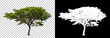 Leinwanddruck Bild - Isolated single tree with clipping path and alpha channel on a transparent picture background. Big tree large image is easy to use and suitable for all types of art work and print.
