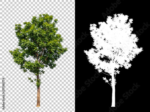 Isolated single tree with clipping path and alpha channel on a transparent picture background Fototapete