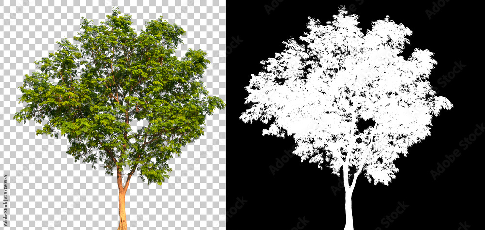 Fototapety, obrazy: Isolated single tree with clipping path and alpha channel on a transparent picture background. Big tree large image is easy to use and suitable for all types of art work and print.