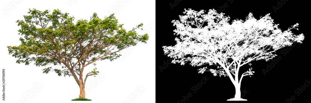 Fototapety, obrazy: Isolated single tree with clipping path and alpha channel on a white background. Big tree large image is easy to use and suitable for all types of art work and print.