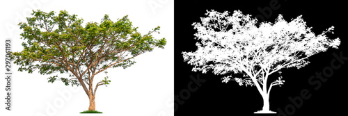 фотографія  Isolated single tree with clipping path and alpha channel on a white background