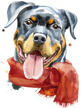 Watercolor Portrait Of Rottwei...