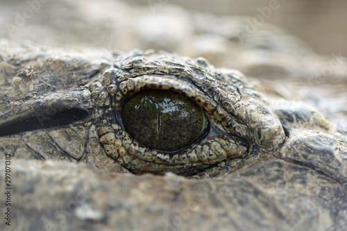 Door stickers Crocodile Mississippi-Alligator