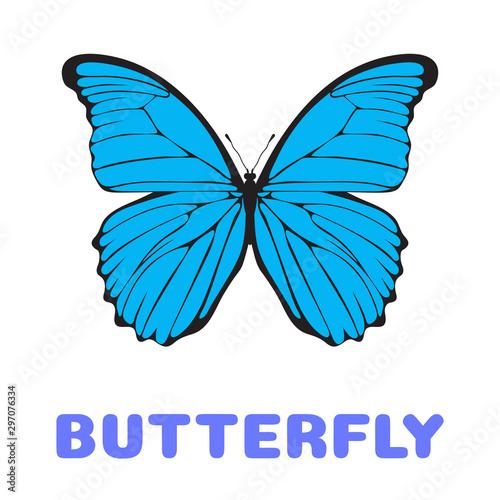 Fotomural Butterfly Morpho didius flashcard