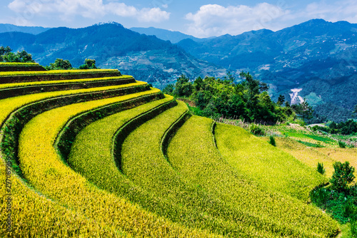 Wall Murals Rice fields Landscape view of rice fields in Mu Cang Chai District, VIetnam