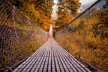 Suspension Bridge Inside Beautiful Forest In Autumn(Fall) Seasons