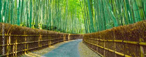 木漏れ日の竹林と小道 Canvas Print