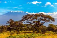 The Snow Peak Of Kilimanjaro