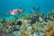 Caribbean Coral Reef Underwate...