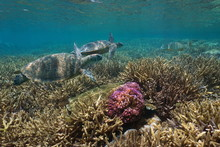 Healthy Coral Reef With Two Gr...