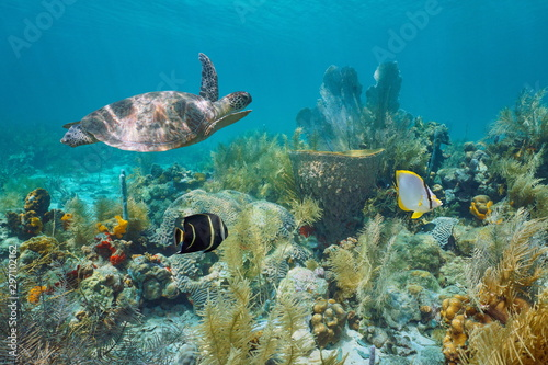 Obraz na plátně Caribbean coral reef underwater with a green sea turtle and tropical fish, Marti